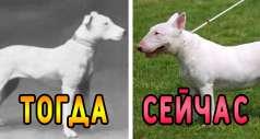 Как изменились популярные породы собак за 100 лет?