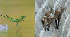 Двенадцать животных со сверхспособностями, которым может позавидовать человечество