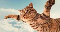 Причина, по которой у кошек 9 жизней