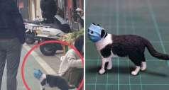 Японский художник воплотил в жизнь забавные картинки домашних животных