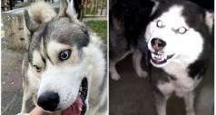 10 пород собак, которые не стоит держать у себя дома