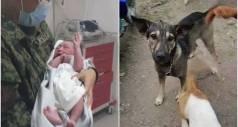 Захватывающая история умной собаки, спасшей жизнь ребенка